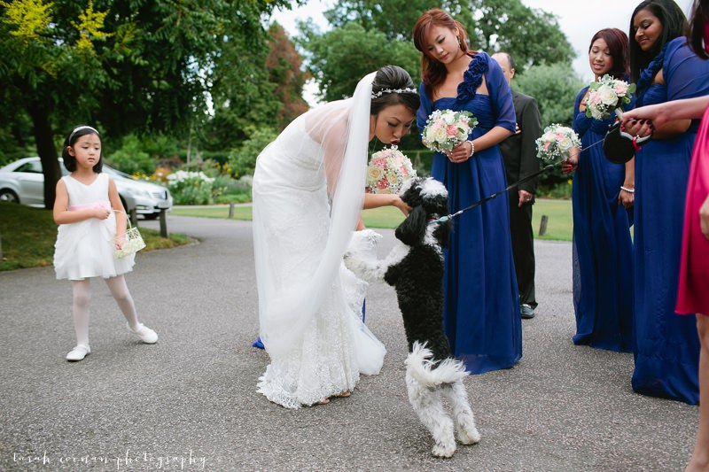 chinese bride and dog
